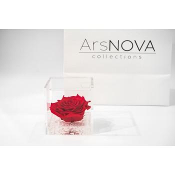 Rosa rossa stabilizzata cube Ars Nova 10x10cm