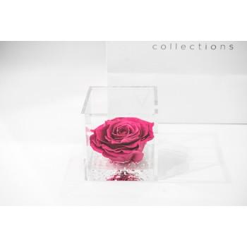 rosa stabilizzata ars nova