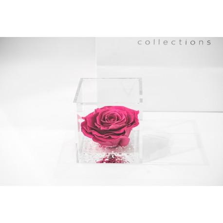 Rosa rosa stabilizzata cube Ars Nova 10x10cm