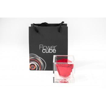Rosa rossa stabilizzata cube Ars Nova 8x8cm
