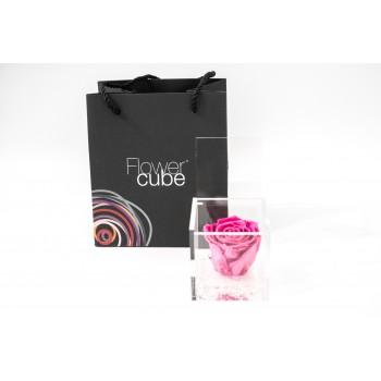 Rosa rosa stabilizzata cube Ars Nova 8x8cm