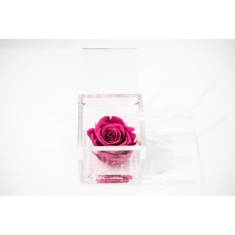 Rosa rosa stabilizzata cube Ars Nova 6x6cm